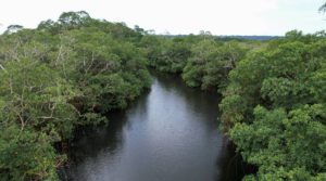 gabon mangrove